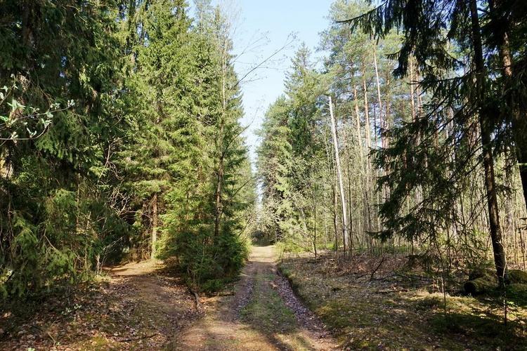 На территории Гомельского района снят запрет на посещение лесов
