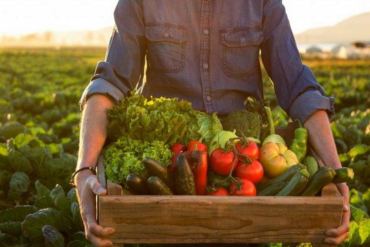 Осень: овощей восемь! В Гомельском районе стартует сезон сельскохозяйственных ярмарок